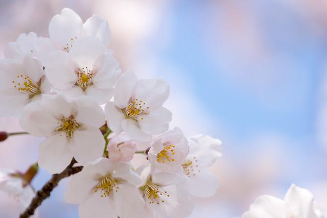 写真_春のリズム