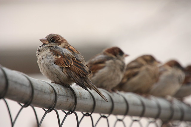 photo of Birds on Fence