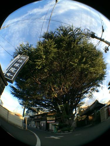 iPhone5sで撮影 olloclip 2013年12月30日