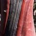 Small photo of Manzanita Trunk
