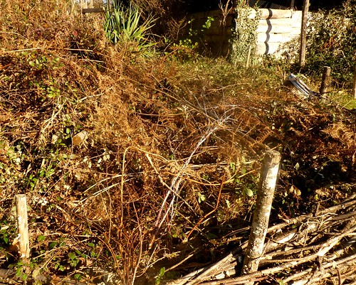 Let rooted brambles dry out before adding mulch