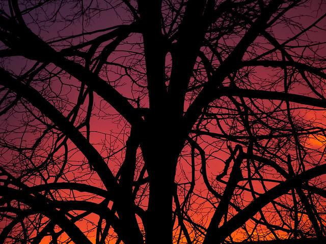 Shade tree sunset
