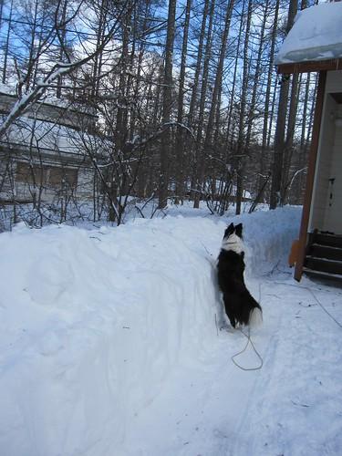 雪の壁が高く、ランディは向こうが見えません。。 by Poran111