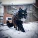 51.365 Snow Cat by jezikalyn