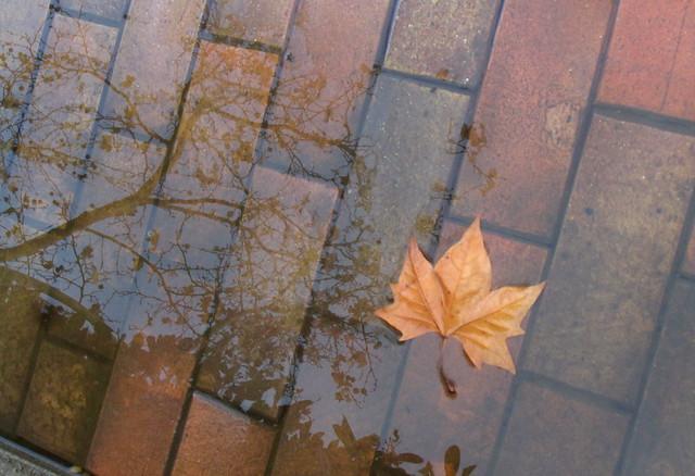 Hoja, charco, árbol, cielo, suelo