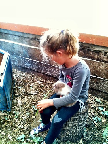 Z and a guinea pig