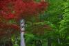 Photo:IMGP4494 By yuki5287