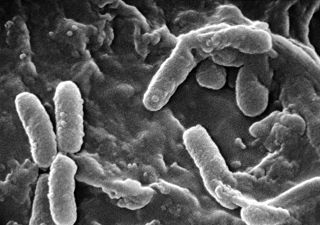 Drug-resistant bacterial infection found in Delaware resident