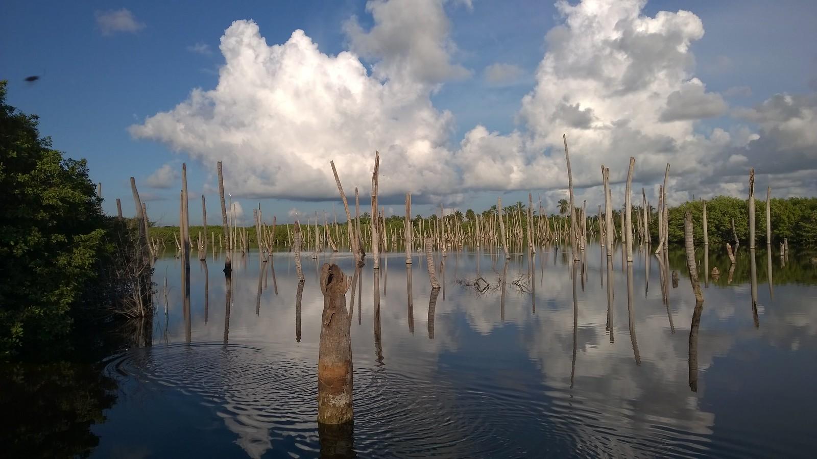 По пути на пляж - останки затонувших пальм :)