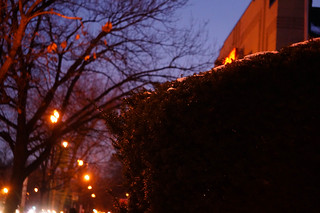 evening Cleveland Park