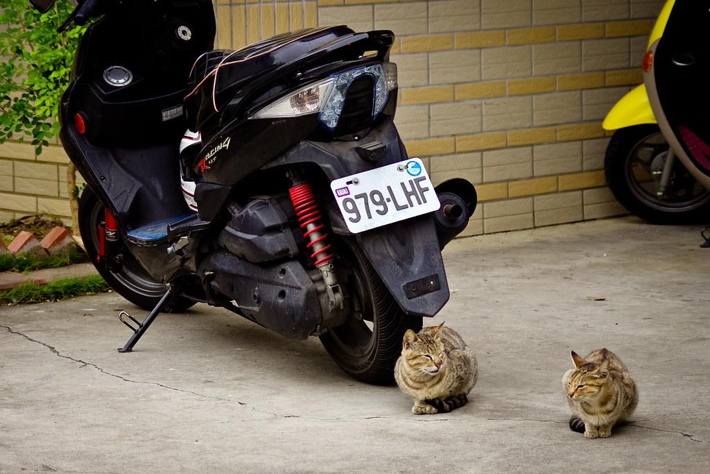 停車場的貓