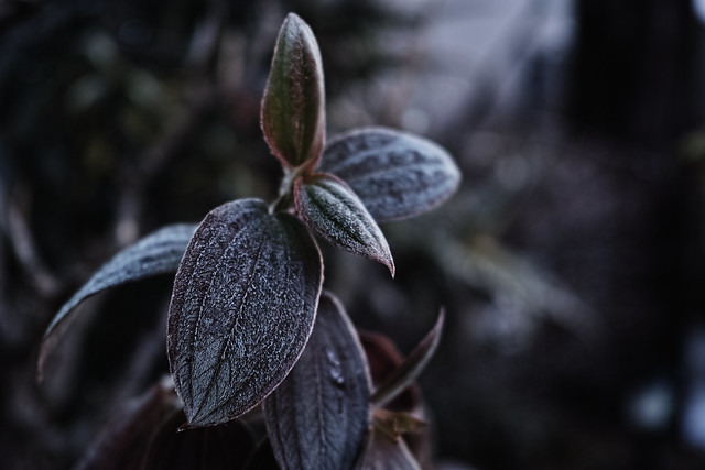 20150206_02_Cold morning 2