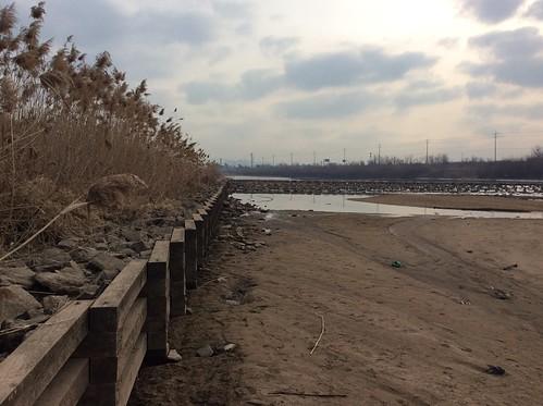겨울 가뭄에 바닥을 훤히 드러낸 공릉천