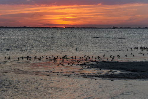 sunset birds landscape florida wildlife