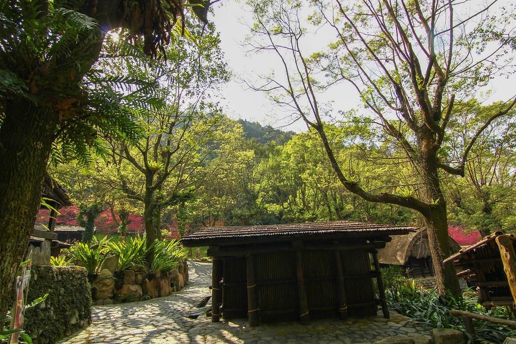 九族櫻花祭 (19)
