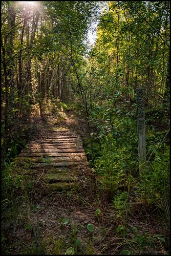 old bridge summer green sunshine forest decay skog bro lush sommar gammal solsken grönt förfall naturstig trekkingpath vandringsled