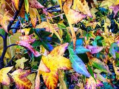 Autumn in Tasmania :) #michfrost