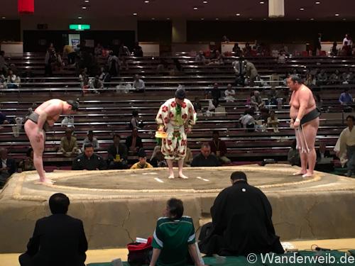 sumo (28 von 53)