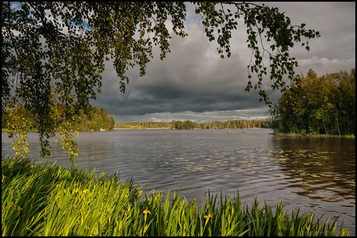 lake water grass leaves clouds forest reeds island blad skog leafs vatten sjö moln ö gräs vass