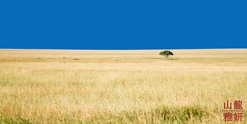 africa tree landscape tanzania safari serengetinationalpark shinyanga seroneraregion tzday02 africanwildcatsexpeditions