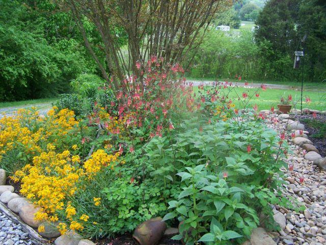 1 - my garden