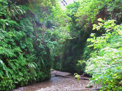Fern Canyon 5