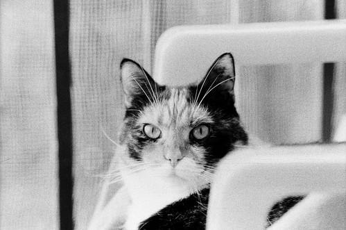 balcony cat