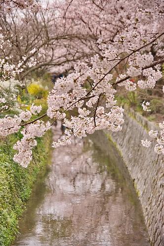 【写真】2013 桜 : 哲学の道/2018-12-24/IMGP9217