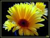 Feliz Dia Internacional dos Homens aos meus Queridos Amigos, Abençoada e Linda Semana! ...***... Happy International Men's Day to My Dear Friends, Blessed and Beautiful Week by Tula_tulipa