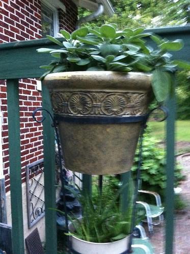 summer photo aloe sage herb