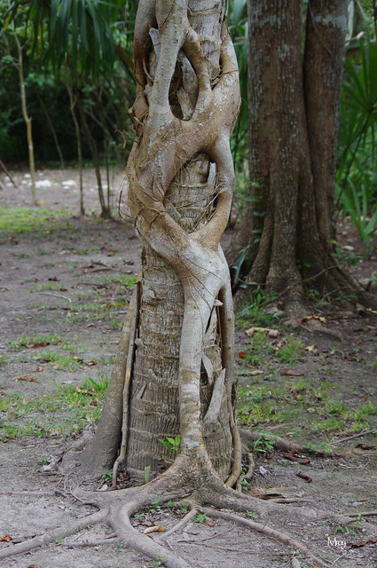11_27_2012 px costa maya 051