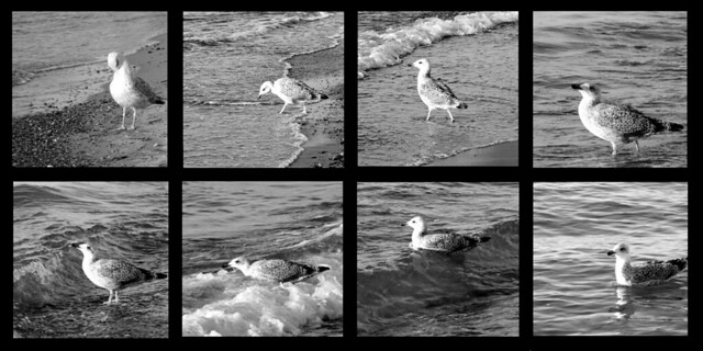 a seagul goes into the water