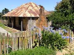 Agapanthus and quaint cottage in Hill End New South Wales. The cottage dates from the gold rush era of the 1870s when Hill End was booming.