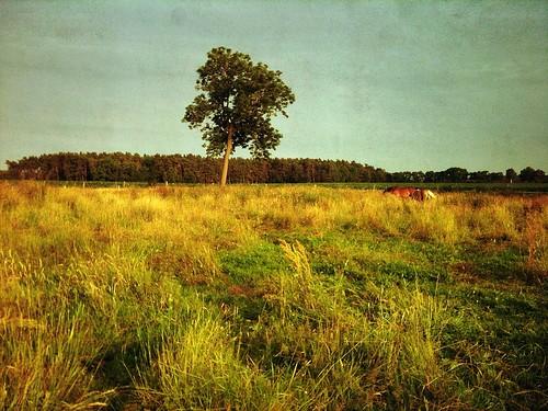 Pferdekoppel, Sachsen Anhalt