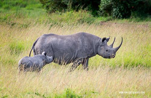Kenia - Masai Mara 62