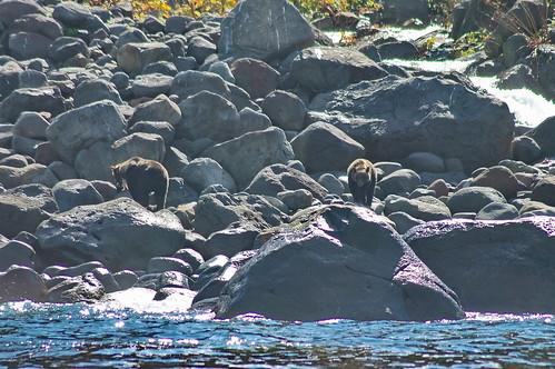 【写真】知床半島遊覧船-熊出現