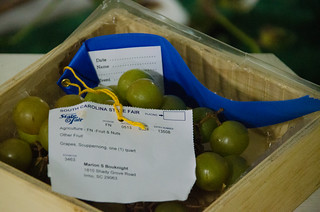 Prize Muscadines