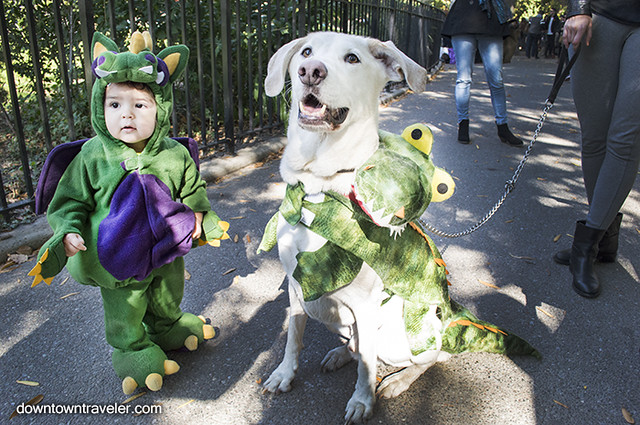 Halloween Dog Costume_Baby and Dog Dragons_Picasso Lab Mix 2