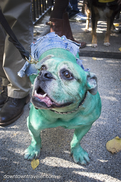 Halloween Dog Costume_She Hulk_Fannie the Bulldog