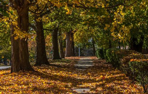 autumn connecticut middletown 06457 johnjmurphyiii originalnef