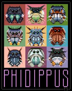 Phidippus.png