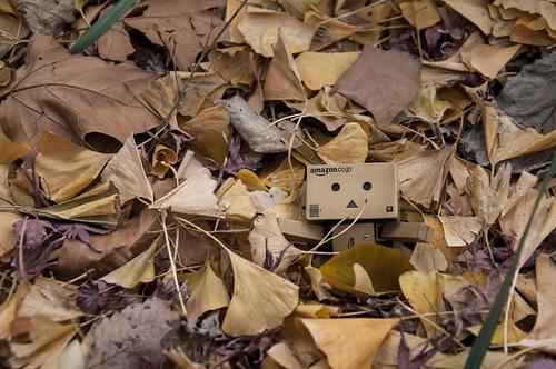 枯葉に埋もれるダンボー