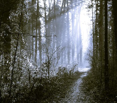 monochrome forest sunbeam waldweg lichtstrahlen