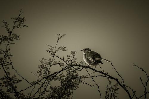 Autor: FJTUrban (sommelier d mojitos)