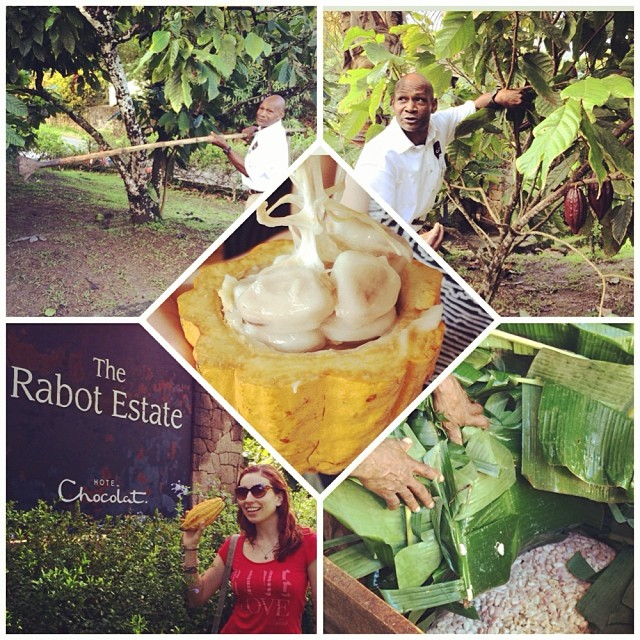Touring the cocoa plantation with expert guide Cuthbert Monroque!