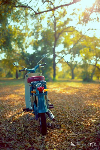 Honda C65 Super Cub by golf1466848