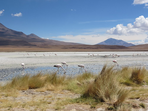 3rd day of the Uyuni Salt Flats