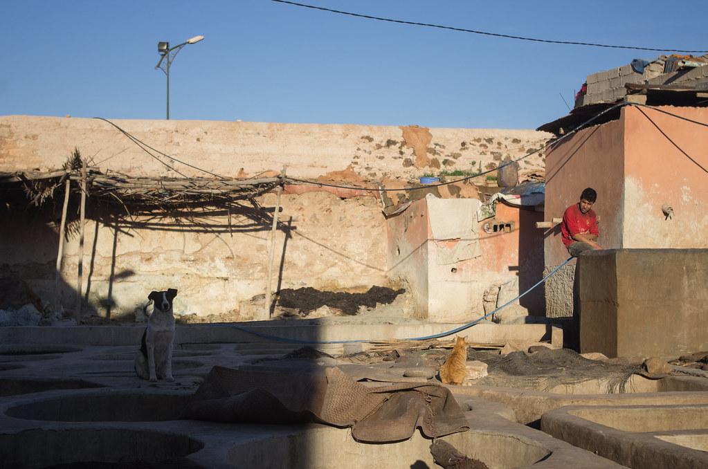 Marrakech - City trek - Fin de journée pour les tanneurs