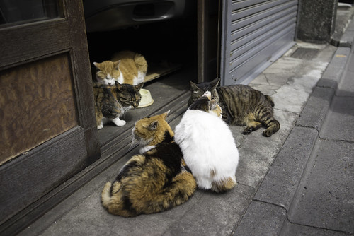 Cat, cat cats!!