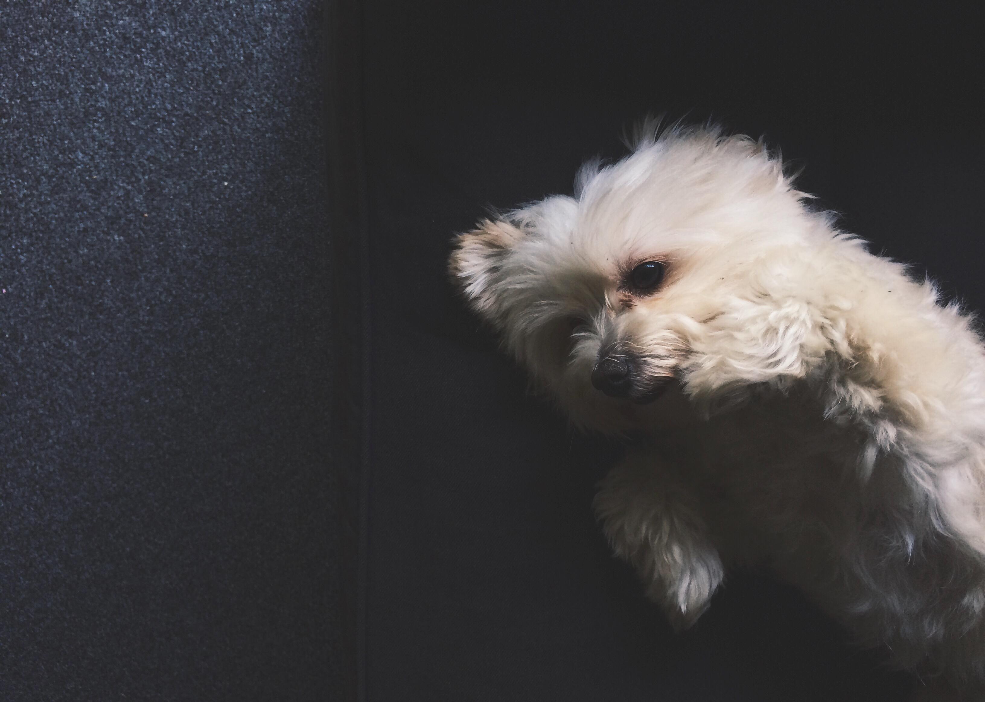 7 Things, Bramble & Thorn, Rain, Storm, Moody, ziggy, dog, cute
